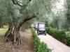 marsciano-vineyard-9