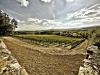 marsciano-vineyard-2