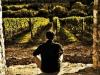 marsciano-vineyard-4